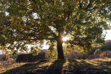 albero irradiato dal sole